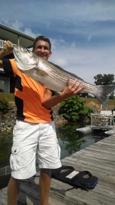 striper-fishing-smith-mountain-lake